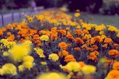 Amarelo e laranja Imagens de Stock