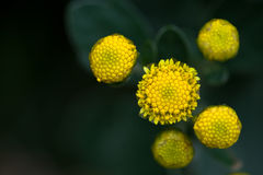 Amarelo e verdes Imagens de Stock