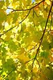 Amarelo e vermelho sae em árvores no parque do outono Foto de Stock Royalty Free