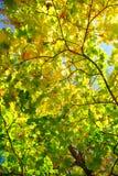 Amarelo e vermelho sae em árvores no parque do outono Fotografia de Stock Royalty Free