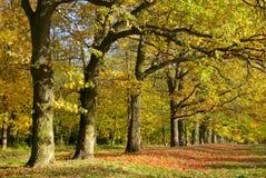 Amarelo e vermelho sae em árvores no parque do outono Fotografia de Stock