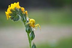 Amarelo no verde Fotografia de Stock Royalty Free