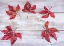 Amarelo ou vermelho sae com o cone do pinho no fundo de madeira branco do grunge Fotografia de Stock Royalty Free