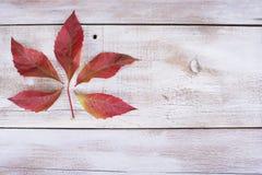 Amarelo ou vermelho sae com o cone do pinho no fundo de madeira branco do grunge Imagem de Stock Royalty Free