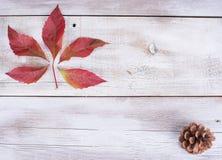 Amarelo ou vermelho sae com o cone do pinho no fundo de madeira branco do grunge Fotografia de Stock