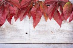 Amarelo ou vermelho sae com o cone do pinho no fundo de madeira branco do grunge Foto de Stock Royalty Free