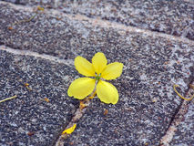Amarelo solitário imagens de stock