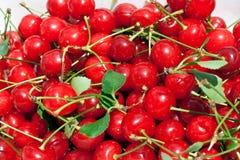 amarene ciliegie Zdjęcie Stock