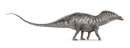 Amargasaurus de dinosaure Photo stock