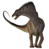 Amargasaurus na bielu Obrazy Stock