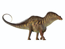 Amargasaurus Side Profile. Amargasaurus was a herbivorous sauropod dinosaur that lived in Argentina in the Cretaceous Period Stock Photos