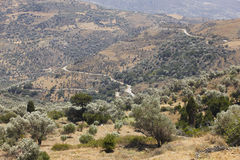 Amari valley in Crete with trees and road. Greece Stock Image