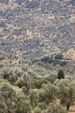 Amari valley in Crete with trees and road. Greece Royalty Free Stock Photo