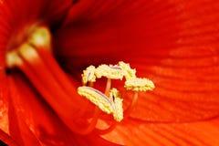 Amarilla rojo Fotos de archivo