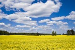 Amarillee el campo y las nubes Imagen de archivo