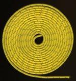 Amarillee la cuerda en bobinas apretadas Imagenes de archivo