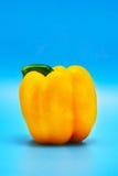 Amarillee la pimienta en azul Foto de archivo libre de regalías