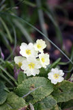 Amarillee la primavera imagen de archivo