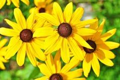Amarillee las flores Fotografía de archivo