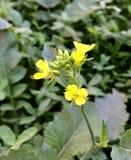 amarillo Imagen de archivo libre de regalías