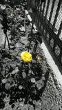 amarillo Fotografía de archivo