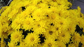 amarillo Imagenes de archivo