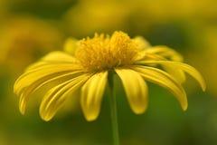 amarillo Foto de archivo