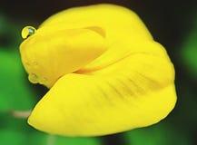 amarillo Imágenes de archivo libres de regalías