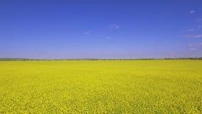 Amarillo agrícola del campo almacen de video