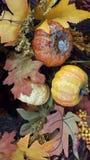 Amarillo, anaranjado, hojas de la caída Imagenes de archivo