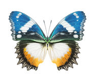 Amarillo azul de la mariposa fotografía de archivo
