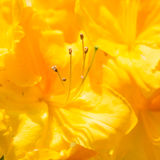 Amarillo brillante Fotografía de archivo
