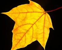 Amarillo brillante Fotos de archivo libres de regalías