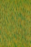 Amarillo colorido del verde del cable de la red Imagen de archivo