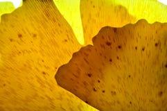 Amarillo con formas abstractas Imagen de archivo libre de regalías