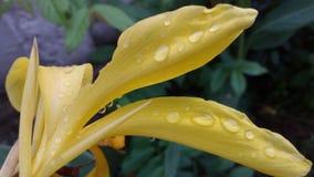 Amarillo de la flor foto de archivo