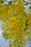Amarillo de la flor Fotos de archivo libres de regalías