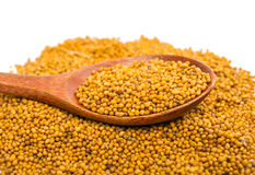 Amarillo de la semilla de mostaza de la especia de Ingradient foto de archivo libre de regalías