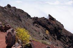 Amarillo de las flores salvajes y ladera de la lava foto de archivo libre de regalías