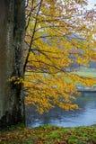 Amarillo de las hojas de otoño foto de archivo libre de regalías