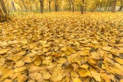 Amarillo de oro Fotografía de archivo