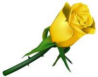 Amarillo de Rose de la boda Fotos de archivo