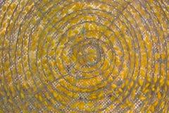 Amarillo del capullo Foto de archivo