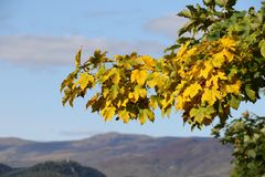 Amarillo del otoño Imágenes de archivo libres de regalías