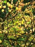Amarillo del verde de la naturaleza del árbol del otoño Fotos de archivo libres de regalías