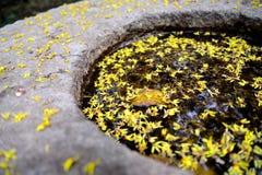 Amarillo después de flores Fotos de archivo libres de regalías