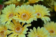 Amarillo, el color de los celos fotos de archivo libres de regalías