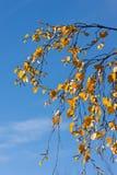 Amarillo en el azul Imágenes de archivo libres de regalías