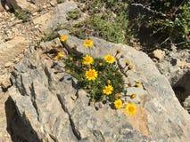 Amarillo en las rocas fotos de archivo libres de regalías