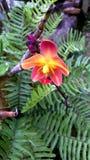 Amarillo en orquídea anaranjada Imagen de archivo libre de regalías